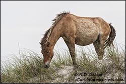 Photo Of The Week Equine Photographers Network
